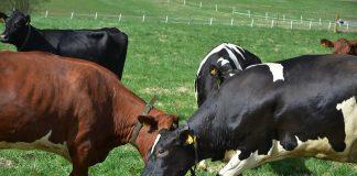 Kor naturbete