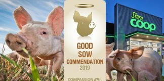 coop:good sow commendation
