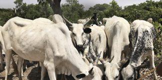Kor Arla Nigeria