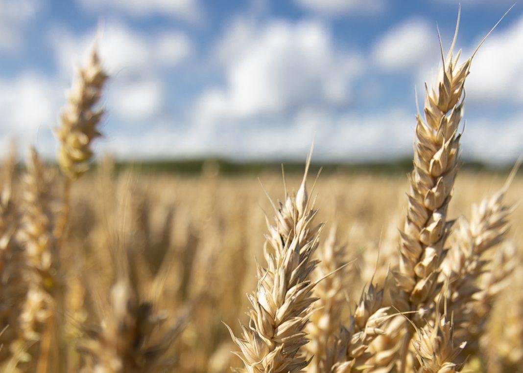 Lantmännen och Yara banar vägen för världens första fossilfria livsmedelskedja