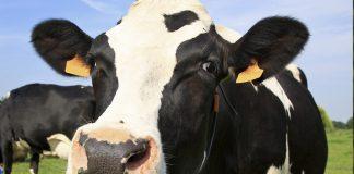 mjölk norrmejerier