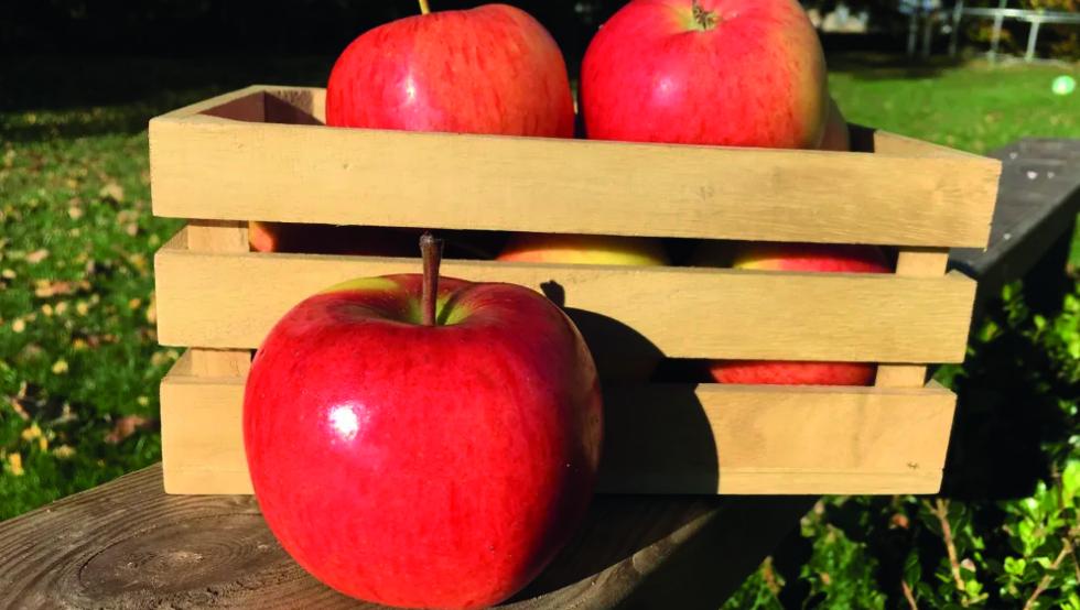 Svenska Äpplen - Butiksnytt