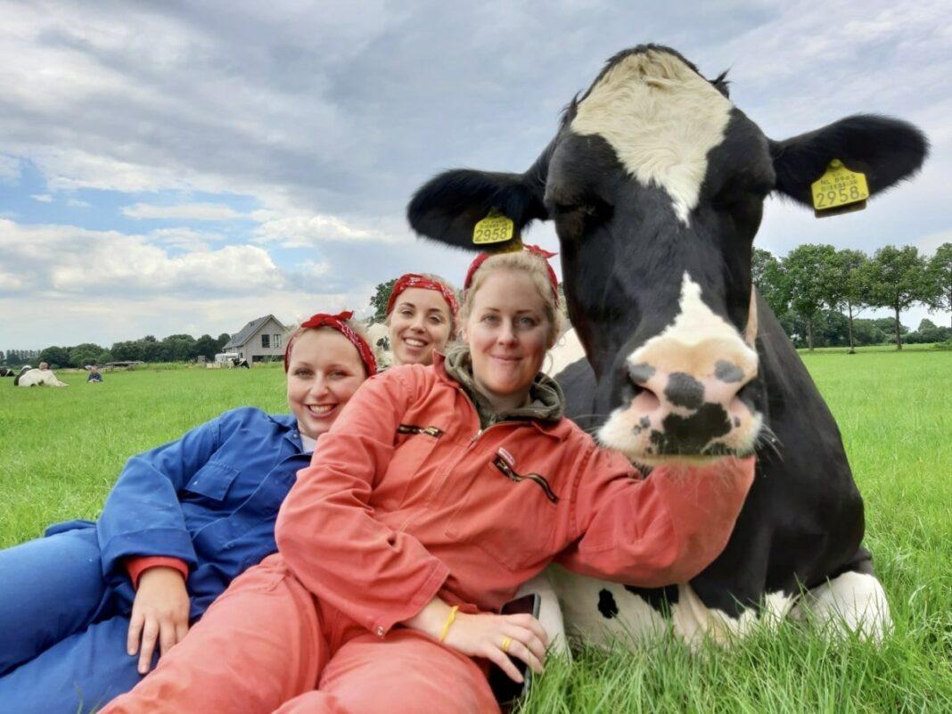 Glada kor och mjölkbönder